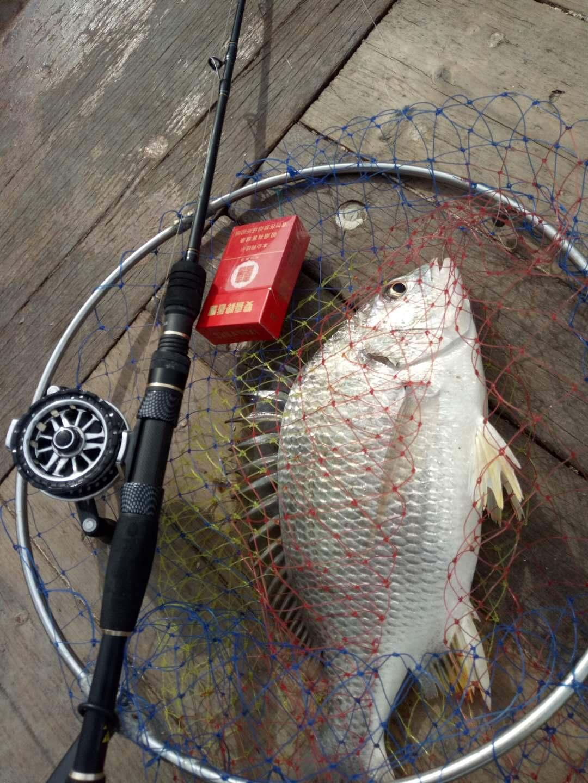 (5月22日)湛江东里私家渔排夜水黄脚立