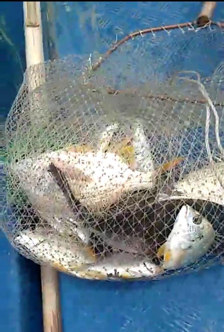 (7月16日)暴雨过后,筏钓惠东盐洲养鱼排