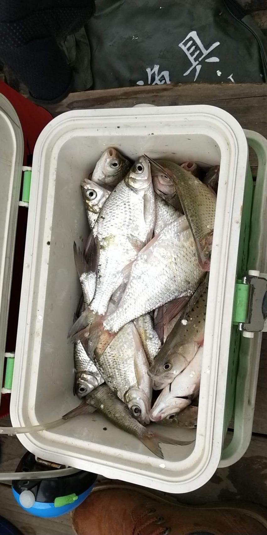 (7月17日)心痒手痒,珠海海泉湾船钓鳊鱼