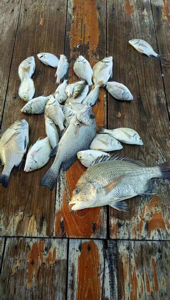 (8月1日)惠东巽寮养鱼排夜水排钓,钓获不多