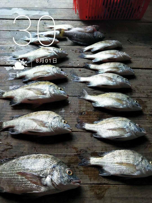 (8月1日)惠州小桂鱼排夜钓,浅水腊鱼